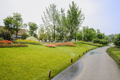 Wayside flowering lawn under irrigation in sunny summer Stock Photography