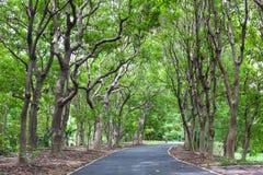 Free Wayside Trees Royalty Free Stock Image - 84665446