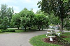 Waza w parku Obraz Stock