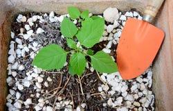 Waza z małą rośliną Obrazy Stock