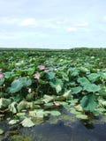 Wazig landschap van moerasland Stock Fotografie