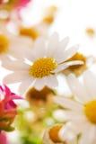 Wazige bloemenachtergrond Stock Fotografie