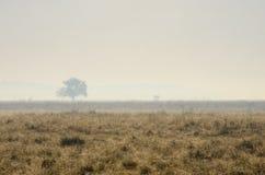 Wazige ochtend in het Nationale Park van Hortobagy, Hongarije Stock Foto's