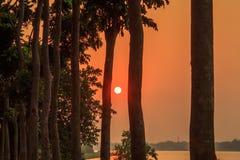 Wazige Zonsondergang door treeline Zonverlichting in de avond Gouden uurmening van de landelijke stad van India royalty-vrije stock foto's