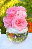 wazowe urocze różowe róże Obrazy Stock