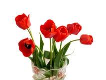 wazowi czerwoni tulipany Zdjęcia Stock