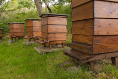 WBC Beehives in the Grass Royalty Free Stock Image