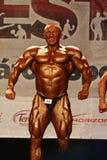 WBPF建身的欧洲冠军 库存图片