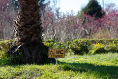 WC plate on the grass. Next to a tree Stock Photography