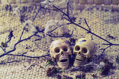 Wciąż życia pojęcia ciała ludzkiego kości kobieta i samiec Zdjęcie Stock