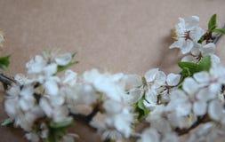 Wciąż życia przygotowania kwiaty Zdjęcia Royalty Free