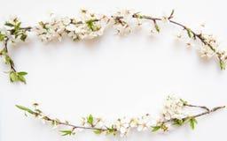 Wciąż życia przygotowania kwiaty Zdjęcie Stock