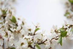 Wciąż życia przygotowania kwiaty Obraz Royalty Free