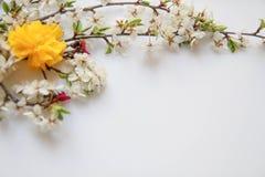 Wciąż życia przygotowania kwiaty Obrazy Royalty Free