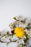 Wciąż życia przygotowania kwiaty Zdjęcie Royalty Free