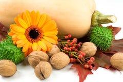 Wciąż życie: bania, orzech włoski, różany biodro, kwiat, liście, thornapple Obraz Royalty Free