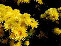 Wciąż życie - kwiaty zdjęcie stock