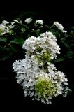 Wciąż życie - kwiaty zdjęcie royalty free