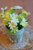 Wciąż życie - kwiaty w garnku Zdjęcie Royalty Free