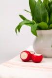 Wciąż życie skład z niedźwiedzia czosnkiem i rzodkwiami (Allium Ursinum) Obraz Stock