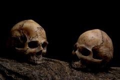 Wciąż życie wspaniałej pary ludzkie czaszki na szalunku Fotografia Royalty Free