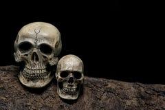 Wciąż życie wspaniałej pary ludzkie czaszki na szalunku Zdjęcia Stock