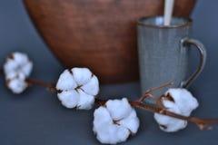 Wciąż życie z bawełnianymi kwiatami zdjęcie royalty free