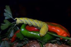 Wciąż życie z gorącym pieprzem i gąsienicą Obrazy Royalty Free