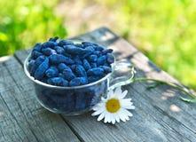 Wciąż życie z honeyberry i stokrotki kwiatem Fotografia Stock