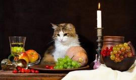 Wciąż życie z kotów winogron psa róży zieleni butelki dyniowymi winogronami zdjęcie stock