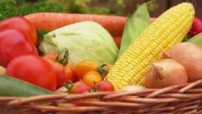 Wciąż życie z kukurudzą, pomidorami, grulami i cebulami w koszu, zbiory wideo