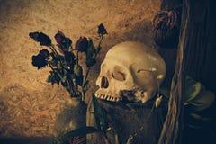 Wciąż życie z ludzką czaszką z pustynnymi roślinami, kaktus, róże Zdjęcie Royalty Free