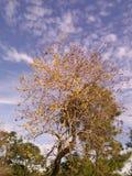 Wciąż drzewo Zdjęcie Royalty Free