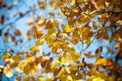 Wciąż trzymający drzewo Fotografia Stock