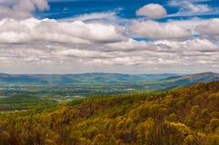 Wcześni wiosna kolory żółci, zielenie w Shenandoah parku narodowym i Obraz Stock