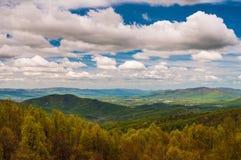 Wcześni wiosna kolory żółci, zielenie w Shenandoah parku narodowym i Zdjęcia Stock