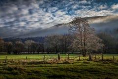 wcześnie rano mgła Zdjęcie Stock