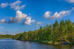 wcześniej brzegu jeziora rano lato Obraz Stock