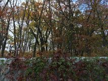 Wcześni jesieni drzewa, metalu ogrodzenie, klon Fotografia Stock