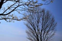 Wcześni wiosen drzewa Obraz Stock