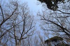 Wcześni wiosen drzewa Zdjęcia Stock