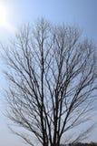 Wcześni wiosen drzewa Obraz Royalty Free