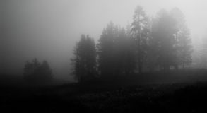 wcześnie rano mglistego park narodowy Yellowstone Fotografia Royalty Free