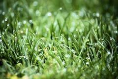 wcześnie rano trawy rosy Zdjęcie Stock