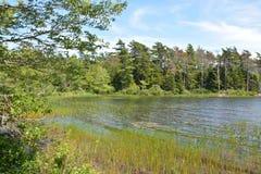 wcześniej brzegu jeziora rano lato Obrazy Royalty Free