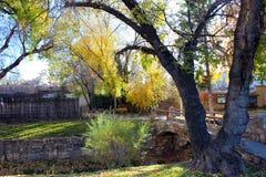 Wczesna jesień, Rozszczepiony bagażnika drzewo Obrazy Royalty Free