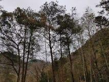 Wczesna jesieni góra zdjęcia stock