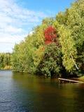 Wczesna jesieni natura Obraz Stock
