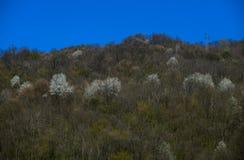 wczesna krajobrazowa halna wiosna Fotografia Stock