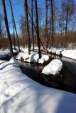 wczesna lasowa wiosna Obraz Royalty Free